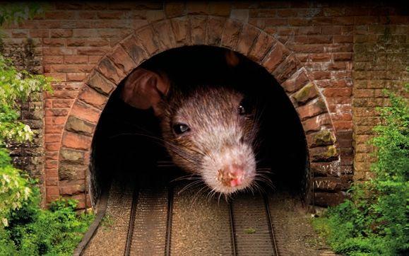 | Rat Tunnel Train 002